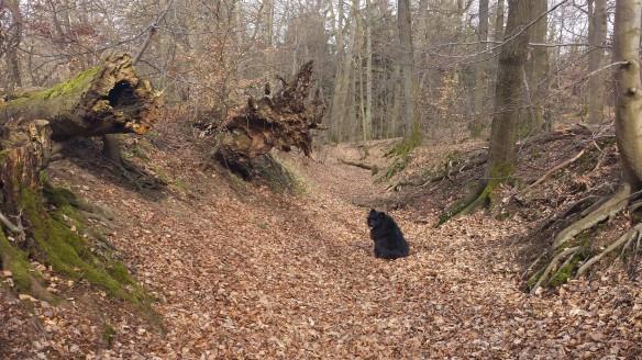 Spits voelt zich thuis in de Eifel. Is ook logisch, want het is zijn geboortegrond. Terug naar zijn roots.....